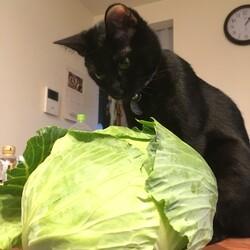 てっちゃん、野菜好き
