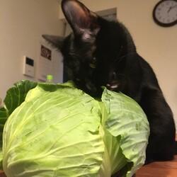 「てっちゃん、野菜好き」サムネイル2