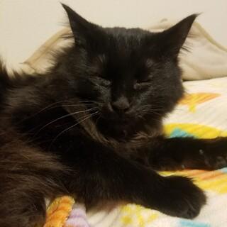 ちょっぴりビビりな黒猫の男の子