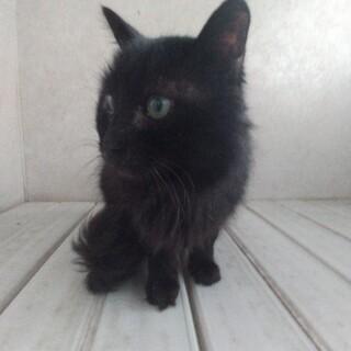 おとなしくて優しいオスの黒猫ジジ!