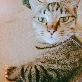 自称イケメンのキジトラQ太郎君 男の子 カメラ好き