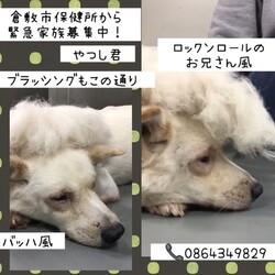 「倉敷のおとーちゃん、やつしをヨロシク!→卒業!」サムネイル3