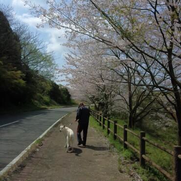 桜満開!!✿