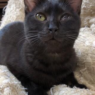 人懐こい小柄な黒猫ちゃん