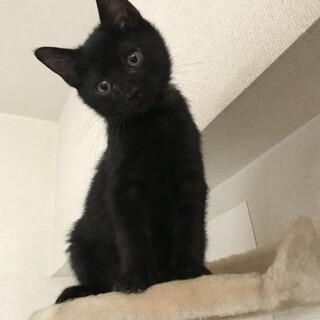 1月18日生まれ 甘えん坊の黒猫 こぐま