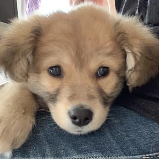 MIX子犬の男の子