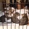 2/17に6匹出産の穏やかなママと子猫2匹