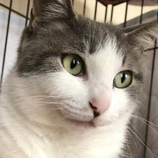 上品な美猫…グレースさん❣️