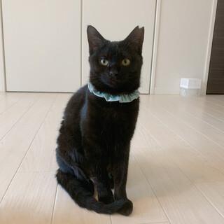 ☆キラキラお目目の黒猫ぷーちゃん☆