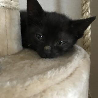 1/18生まれ 黒猫 ぽちくん 一旦募集停止します
