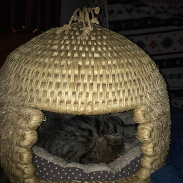 Arthur in donated straw cat house