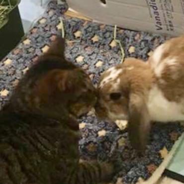 Arthur meeting Chestnut (Kuri)
