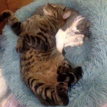 Arthur and Tucker sleeping