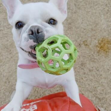 大好きな緑のボール