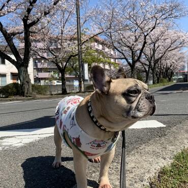 令和2年4月6日桜がやっと満開です