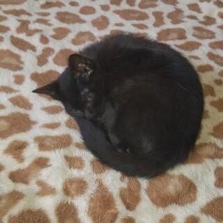 可愛い黒猫2匹です。