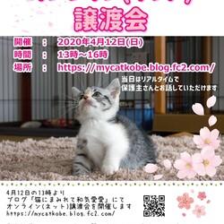 オンライン譲渡会に変更です!【猫の譲渡会】猫まみれwithカーロ 第56回