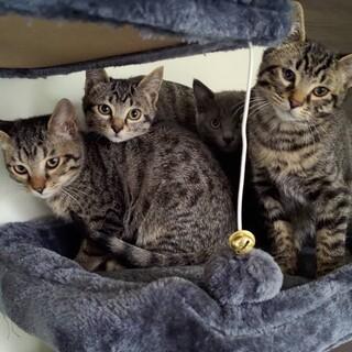 生後3か月の子猫の里親募集しています。