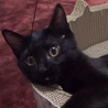 子猫のみぃちゃん(クロネコ)