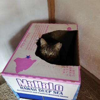 箱が大好きな箱入りにゃんこ