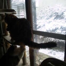 「雪の季節は終わったはずですが…」サムネイル2