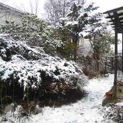 「雪の季節は終わったはずですが…」サムネイル3