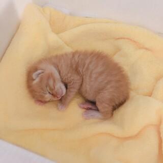 産まれて間もない子猫