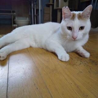 初心者でも大丈夫!穏やかな茶白大人ネコ
