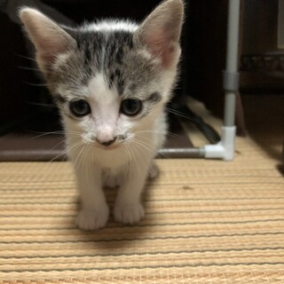 子猫をかわいがっていただける方を探しています