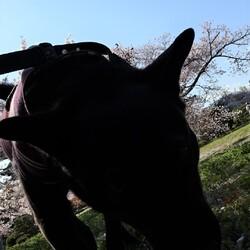 「カメラ目線だが」サムネイル3