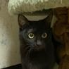 【ジジ】とってもおしゃべりでママっ子な黒猫