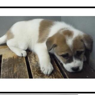 里親様を待っています。子犬♀003