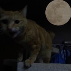 「月に・・・」サムネイル1