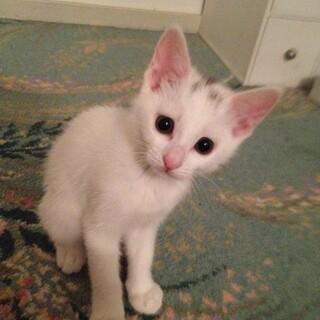 白猫の女の子です