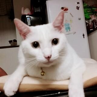雑種白猫ちゃん