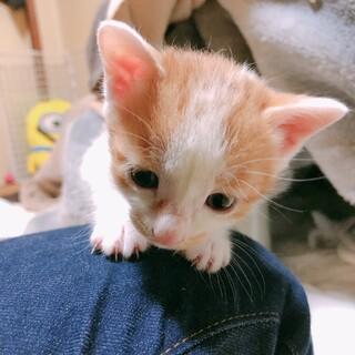 可愛い子猫ちゃん姉妹