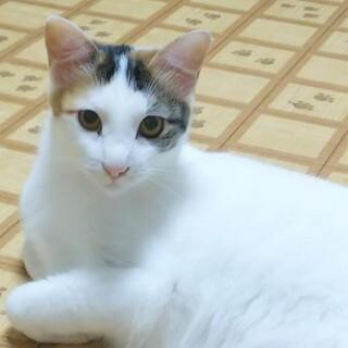 りな☆猫も人も大好きな愛らしい女の子