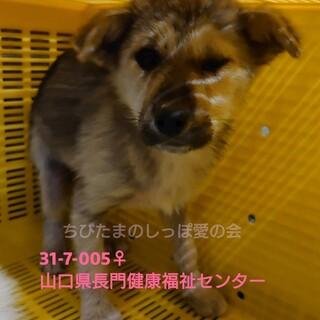 可愛い垂れ耳子犬ちゃん♀②♡処分対象です。。
