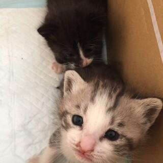 子猫2匹里親募集!!