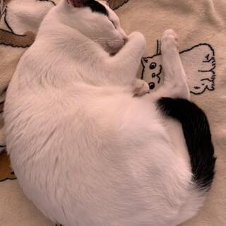 食いしん坊ジャージーくん 白黒猫ちゃん