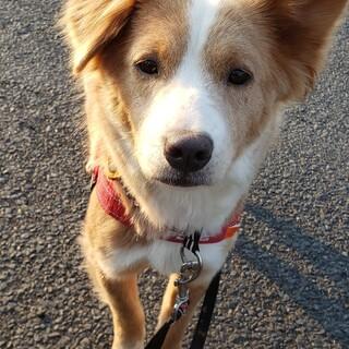 お耳がチャーミングな中型犬の女の子