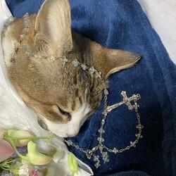 かわいがっていた猫が突然亡くなり、、、