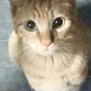 【代理投稿】人の都合で外に出された家猫ちゃんです