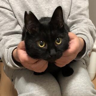 シャイで甘えん坊の黒猫さん♥️