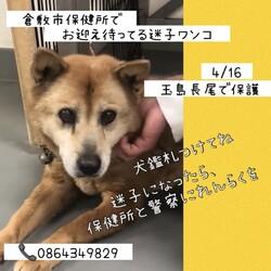 「倉敷の迷子ワンコたち、飼い主さん!→全頭卒業!」サムネイル3
