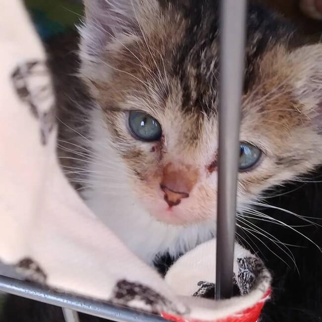 ひらかたし地域猫☆しっぽの会のカバー写真