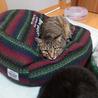 猫大好きの無邪気男子☆ベガくん2-3歳 サムネイル6