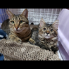 猫大好きの無邪気男子☆ベガくん2-3歳 サムネイル7