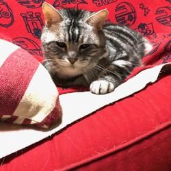 ツンデレ系猫っぽい猫