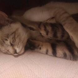 2匹の猫の里親になりました